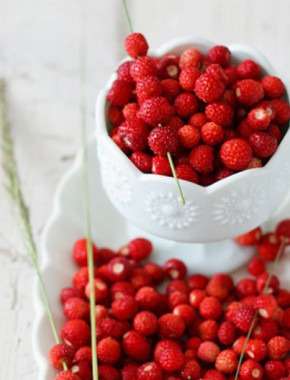 wild-berry-cover