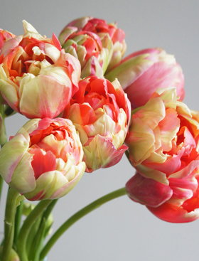 FlowerMuse-Tulips-Mothers-day
